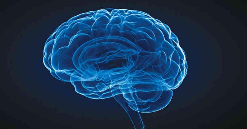 'Interbrain': Nuestros Cerebros Están Conectados Unos Con