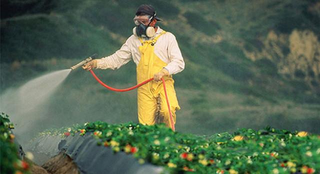Operario aplica pesticida cultivo