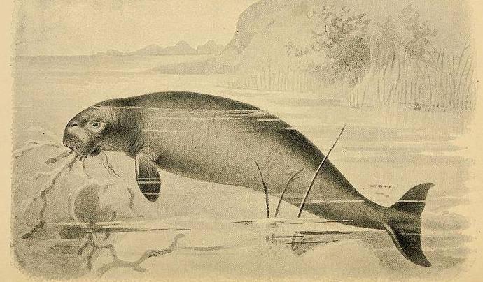 Vaca marina de Steller