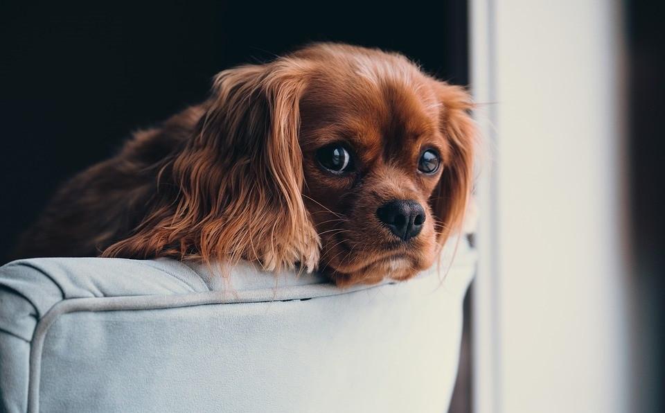 Adorable cachorro de perro