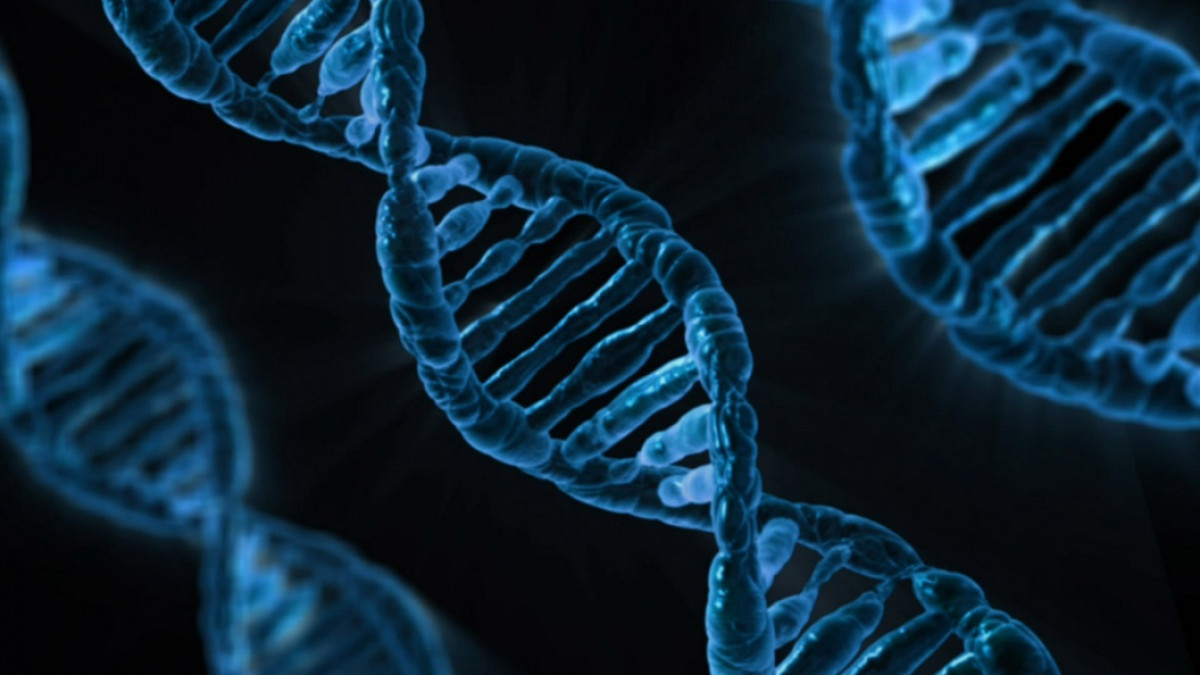 Estructuras de ADN