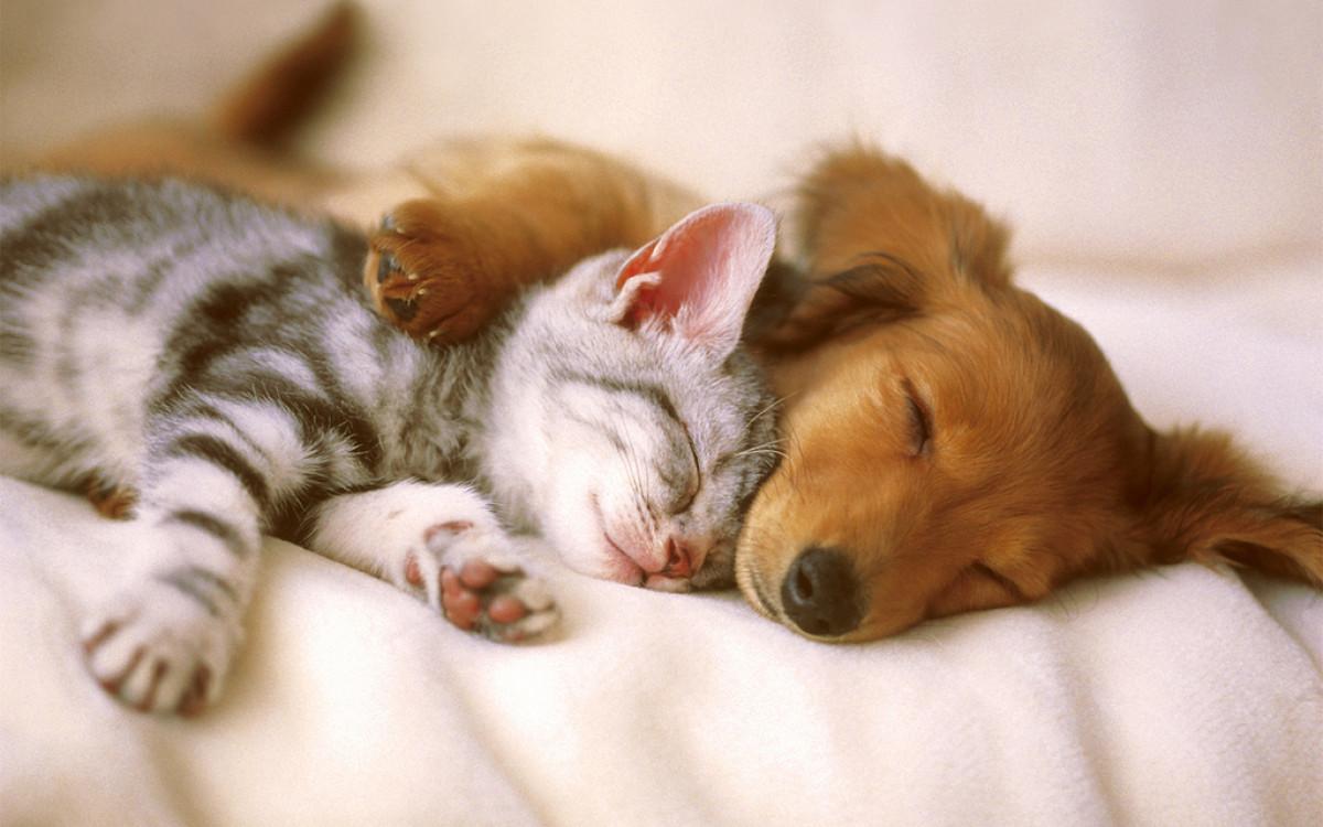 Los perros son mu00e1s listos que los gatos, segu00fan cientu00edficos
