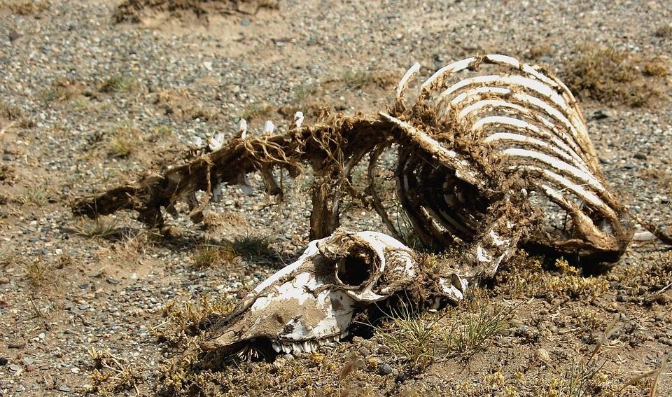Esqueleto animal