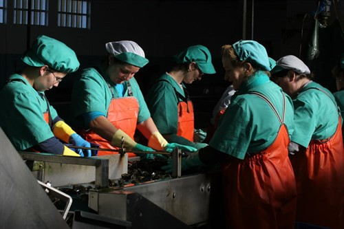 Mujeres trabajando 1
