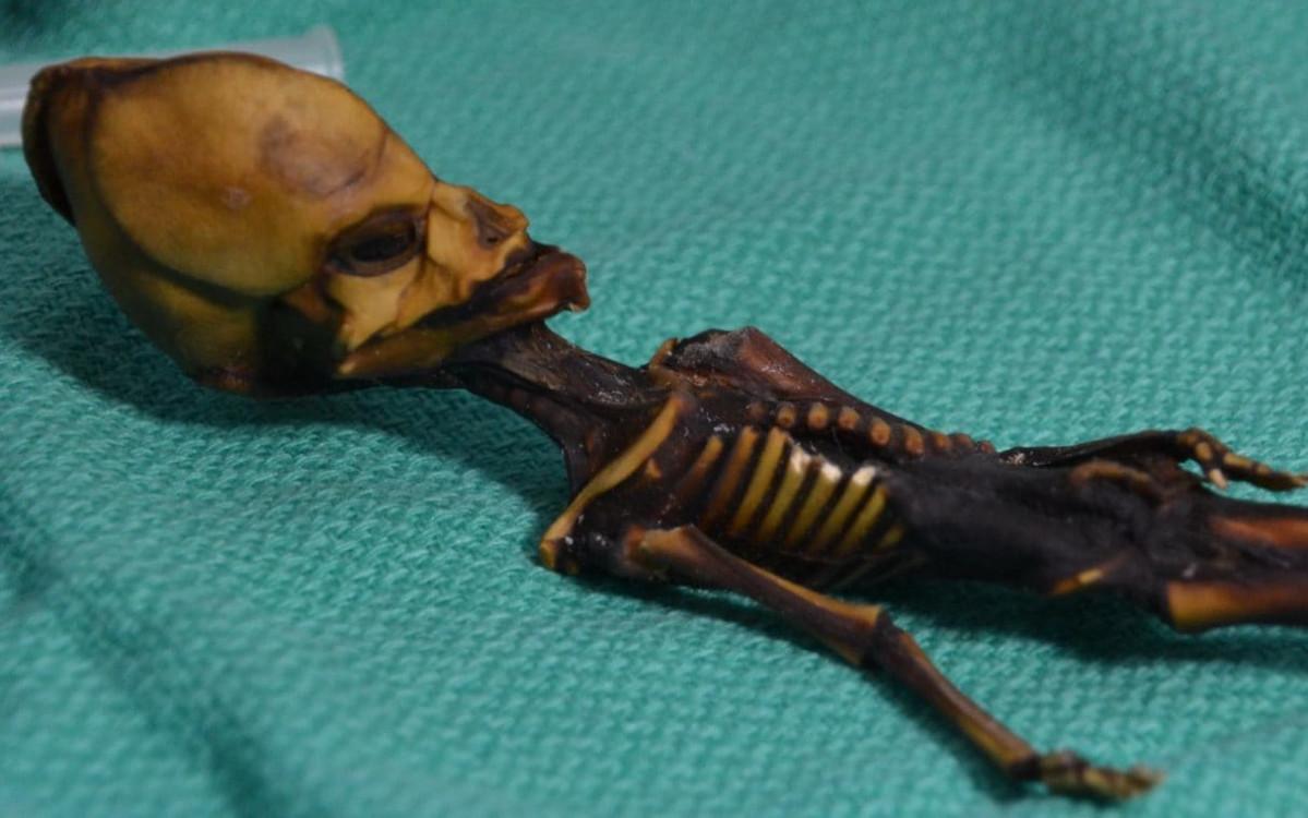 El esqueleto mide apenas 15 centu00edmetros