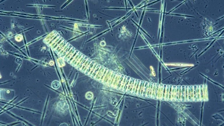 Plancton