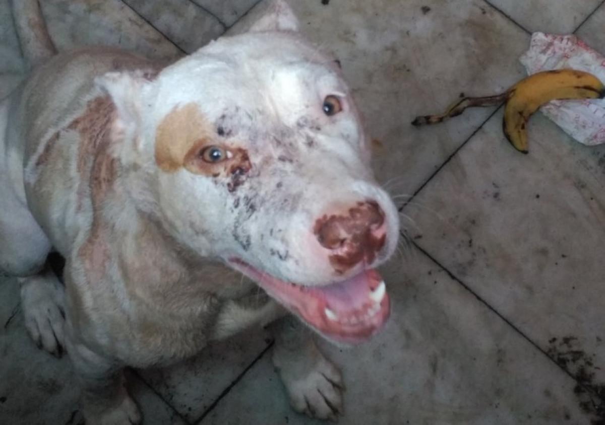 Perros maltratados en Valu00e8ncia