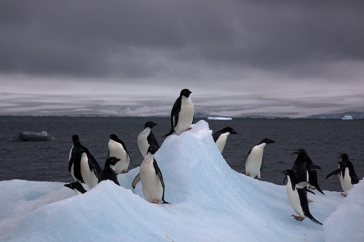 Pinguinos en la Antu00e1rtida
