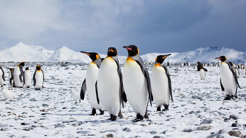 Grupo de pingüinos en la Antártida